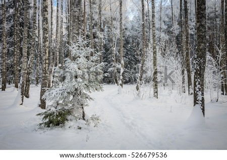winter came in forest