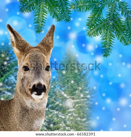 winter christmas card wit deer - stock photo