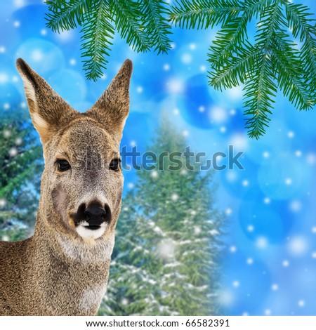 winter christmas card wit deer - stock photo