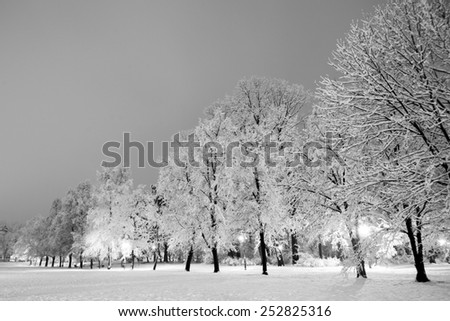 Winter city park in evening. Black and white. - stock photo