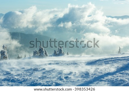 Winter cloudy mountain landscape with icy snowy fir trees on slope (Carpathian). - stock photo