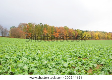Winter crops in the fields in autumn - stock photo