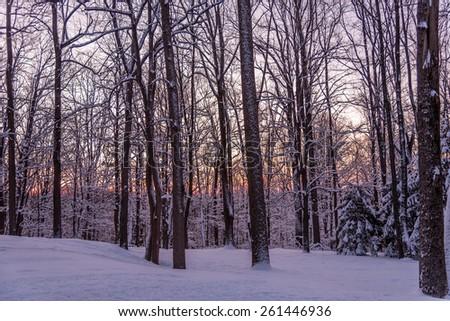 Winter Dawn in Snowy New Jersey - stock photo