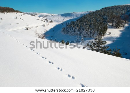Winter, deep snow and  footprints.
