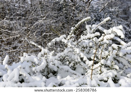 winter detail of bushes covered with recent snow in city park at Stuttgart, Baden Wuttenberg, Germany  - stock photo