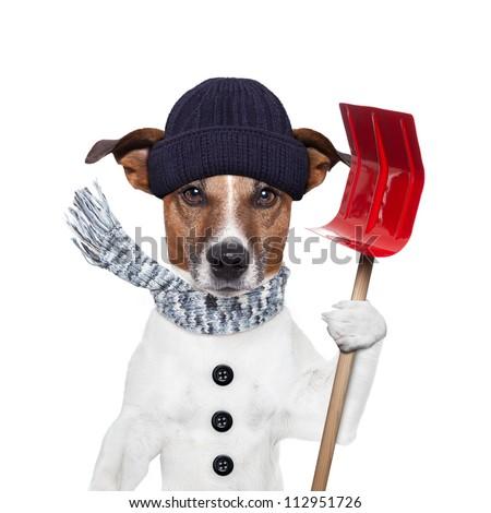 winter dog red shovel snow - stock photo