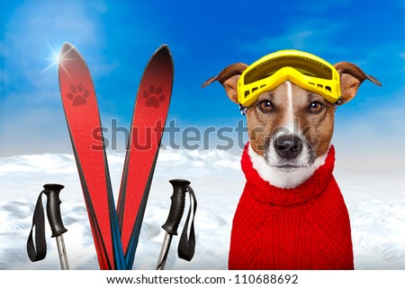 winter dog ski snow - stock photo