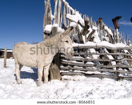Winter donkey - stock photo