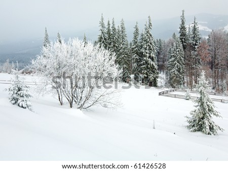winter dull country mountain landscape with  fence and fir trees