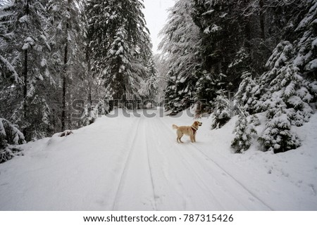 winter excursion with the dog in Val Canali - Trentino