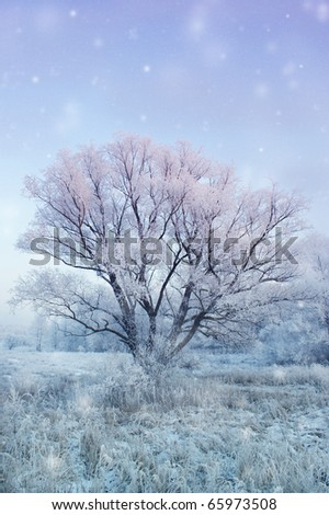 winter fairy landscape with falling snow - stock photo