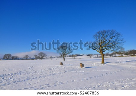 Winter Fields - stock photo