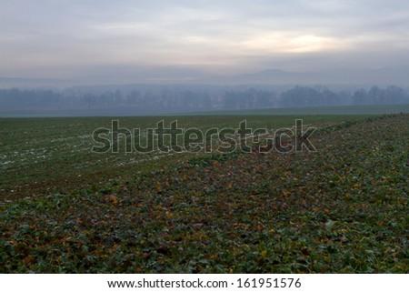 Winter fields in Poland. - stock photo