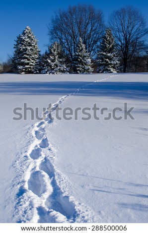 Winter footprints color - stock photo