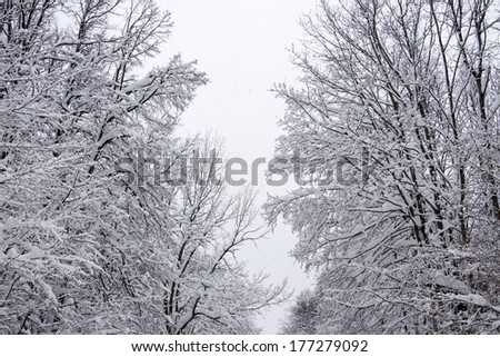 Winter forest after snowfall. - stock photo