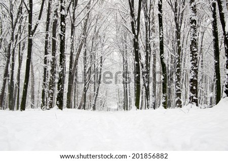 winter forest  and the road - stock photo