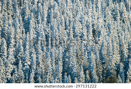 Winter Forest at Mount Rainier National Park - stock photo