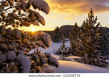 Winter forest at sunset in the mountains