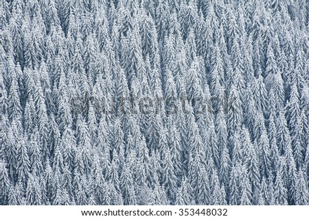 Winter forest background. Fresh soft snow and a pine-tree forest in the Carpathian mountains, Ukraine - stock photo