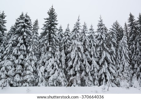 Winter forest covered by snow in the Black Forest in Germany - stock photo