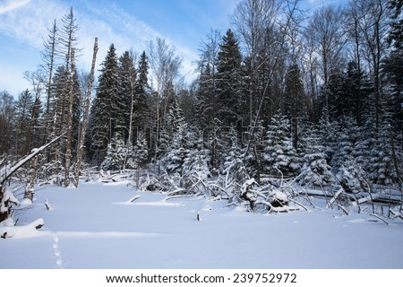 winter forest covered with snow. - stock photo