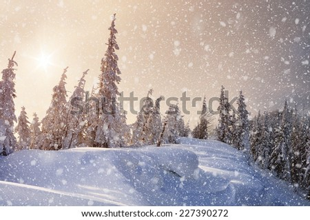 Winter forest covered with snow. Christmas landscape. Fabulous trees in snowdrifts - stock photo