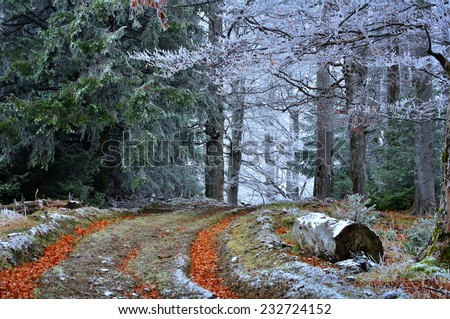 Winter forest,dream forest - stock photo
