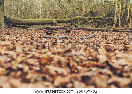 Winter forest floor with scattered decaying brown fallen leaves and a dead tree trunk and branches lying on the ground , low angle view, nature background - stock photo