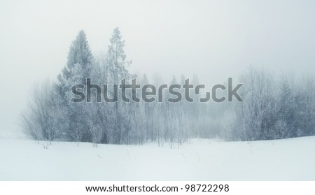 Winter forest in frost