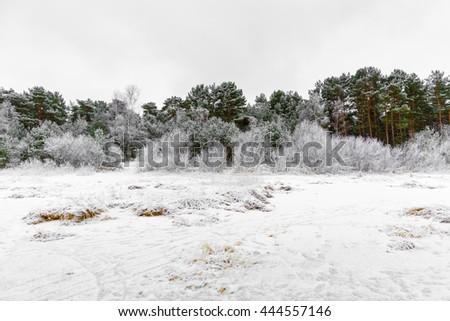 Winter forest in Jurmala, Latvia - stock photo