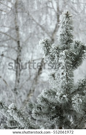 Winter forest in snow.