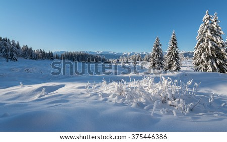 Winter forest in the mountains on a sunny day