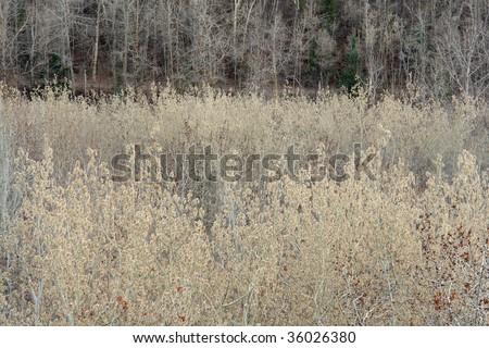 Winter forest in the north saskatchewan river valley, edmonton, alberta, canada - stock photo