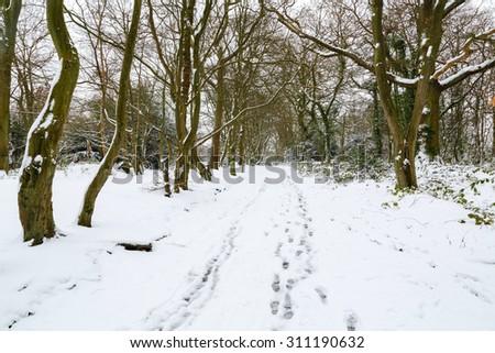 Winter forest landscape - stock photo