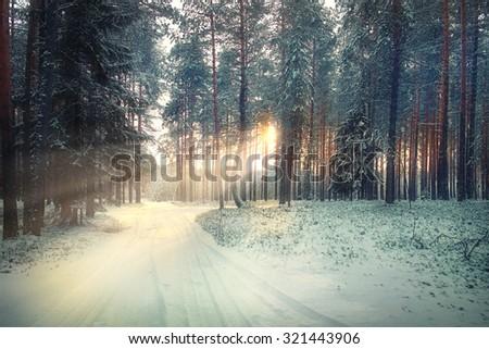 winter forest landscape sun rays - stock photo
