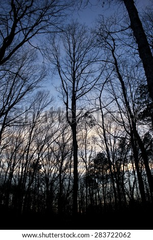 Winter Forest - the evening settles on a winter forest as trees seem to spread their bare branches skyward to embrace the coming star filled night - stock photo