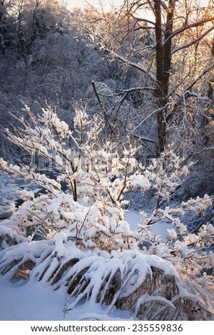 Winter forest trees covered in snow after heavy snowfall in nature with warm sunlight. Ontario, Canada. - stock photo