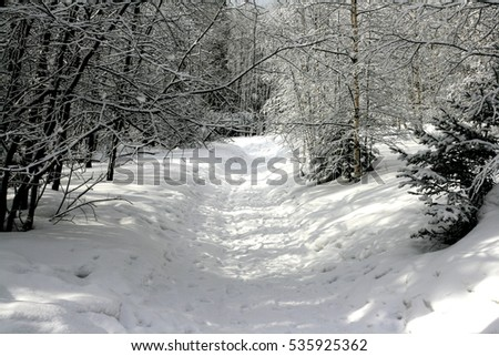 Winter forest. Trees in the snow. New year mood.
