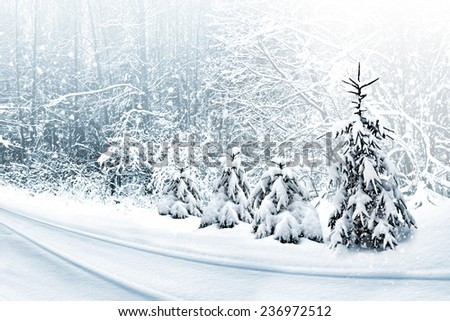 Winter Forest. Winter landscape. - stock photo