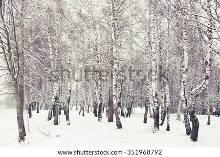 Winter forest.Winter landscape.