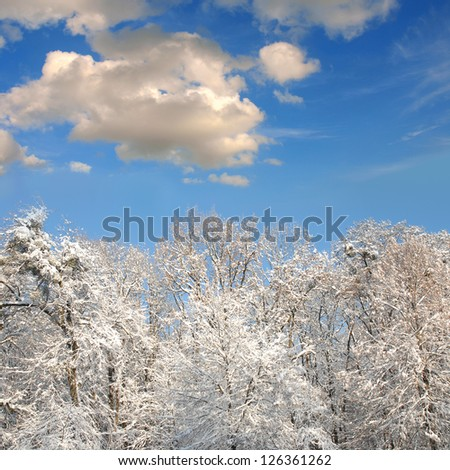 winter forest with lot of snow - stock photo