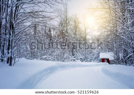 """winter big and beautiful singles Discover garden design ideas, beautiful """"i love the in-depth articles and the beautiful photography in garden design magazine every single page winter 2018."""