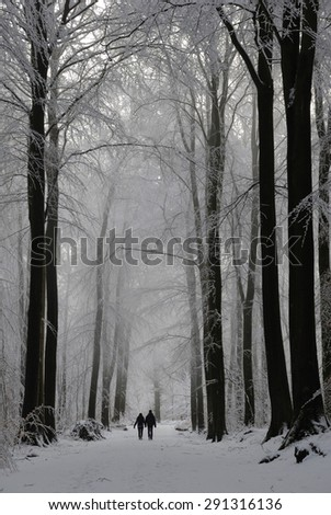 Winter Forrest, Germany
