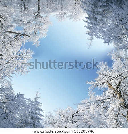 Winter frame of trees covered by snow - stock photo