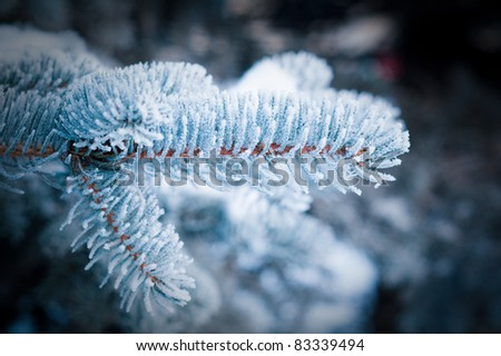 Winter frost on spruce tree  close-up .Shallow depth-of-field. - stock photo