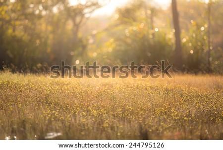winter grassland in thailand - stock photo