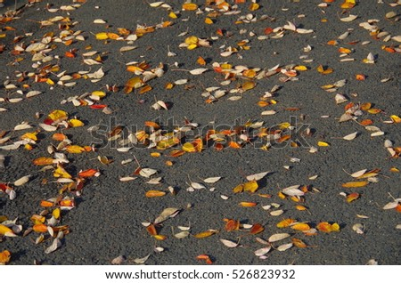 winter has come fall leaves colorful red yellow