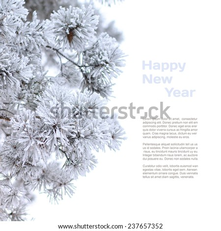 Winter holiday background. Close up image of frosty branches of pine with copy space isolated on white background. - stock photo