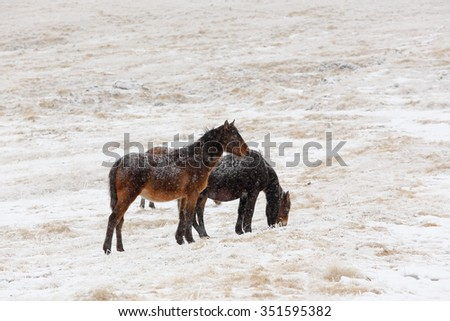 Winter. Horses grazing on the slopes of the North Caucasus, Russia. - stock photo