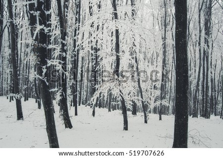 winter in forest with snow